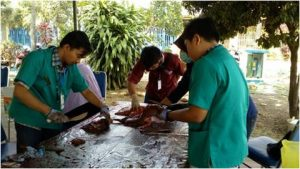 pemeriksaan postmortem oleh calon dokter hewan FKH UB